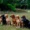 The Labrador Line Up